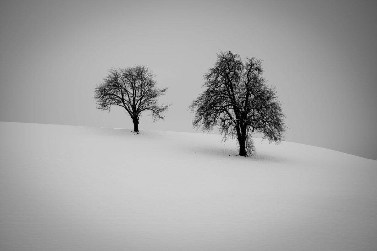 Zwei Bäume im Winter, aufgenommen im Seetal 2015